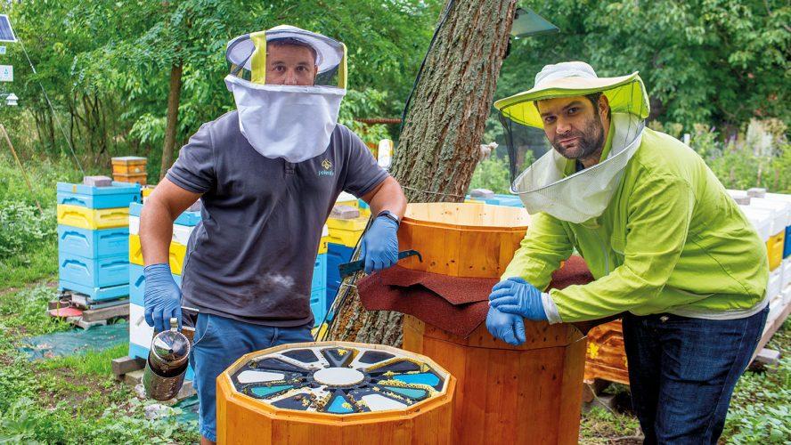 Как модерните технологии на Pollenity спасяват пчелите